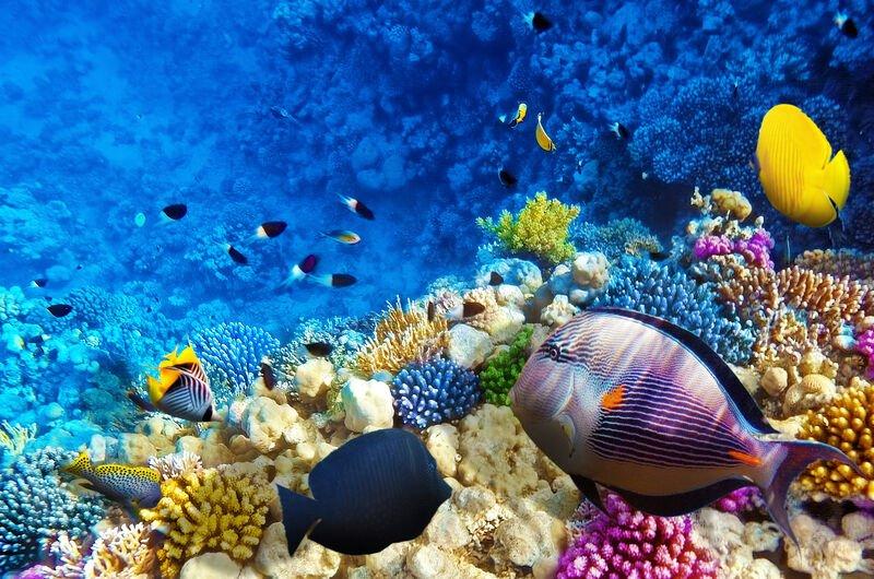 SHARM EL SHEIKH - paradisul subacvatic